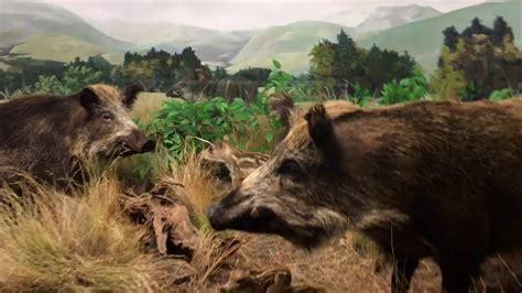 international wildlife museum tucson az youtube