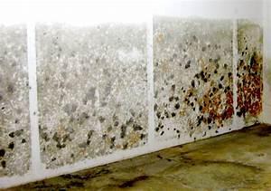 Schimmel An Tapete : schimmelpilze und holzzerst rende pilze chemisches labor ~ Lizthompson.info Haus und Dekorationen