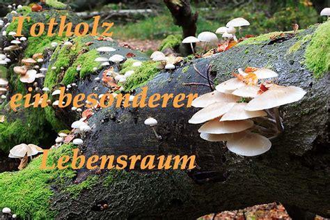 Entstehen Pilze Im Garten by Totholz