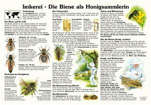 Warum Machen Bienen Honig : imkerei die biene als honigsammlerin 50x70 70x100 cm insekten ameisen und spinnen ~ Whattoseeinmadrid.com Haus und Dekorationen