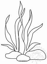 Seaweed Coloring Printable Ocean Drawing Underwater Coral Neocoloring Nature Cartoon Templates Sheets Stencil Coloringpage Eu sketch template