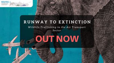Runway to Extinction: Airports and Airlines in Every