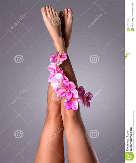 beautiful slender female legs  flower royalty