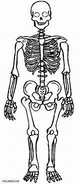 Skeleton Coloring Pages Anatomy Printable Skull Cool2bkids Human Bones Skeletons Sheets Books sketch template