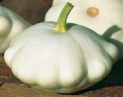 cuisiner un patisson blanc plants de légumes autres légumes gt patisson croblan