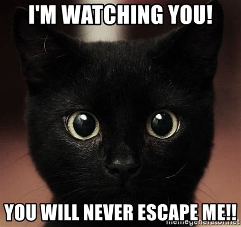 Im Watching You Memes - i m watching you you will never escape me black cats meme generator