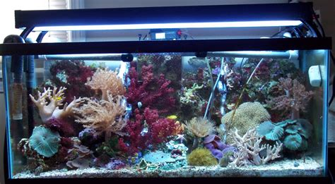Well I Just Want Picture Of Everyones Tank Just So I Can