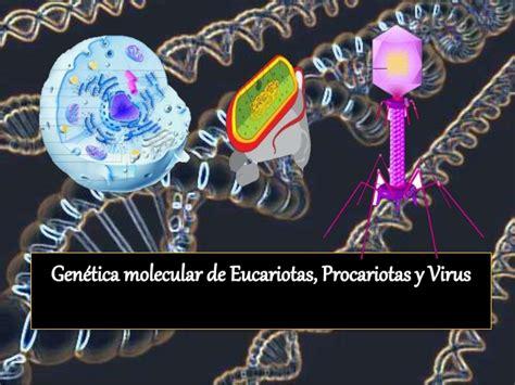 genetica molecular de eucariotas procariotas  virus
