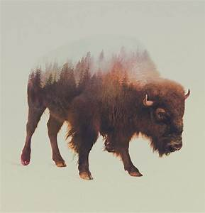 Double exposure animal portraits by norwegian photographer for Double exposure animals andreas lie