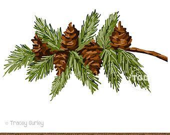 pine cone clipart pine garland pencil   color pine
