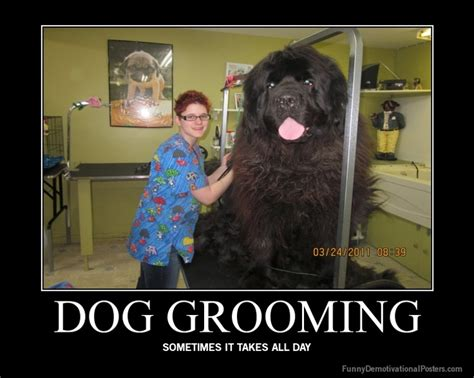 Dog Groomer Meme - ekcgrooming everything about dog grooming information products show trims and etiquette