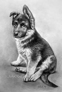 German Shepherd Pencil Drawing Traditional Art