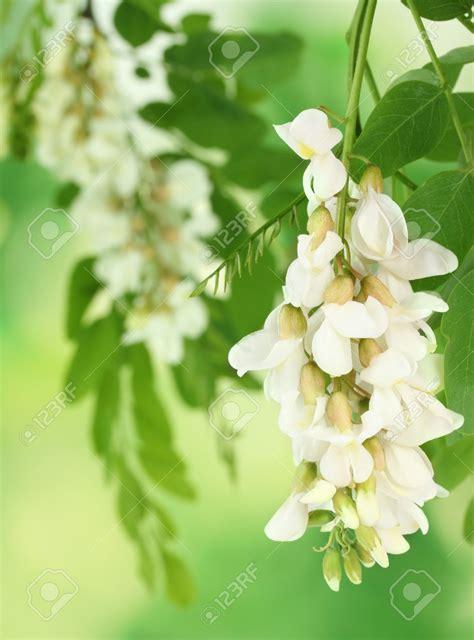 fiori di fiori di primavera da mangiare omaggio alle donne