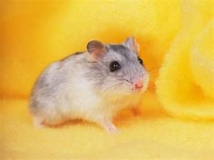 Cute Hamster Wallpapers - Wallpaper Cave