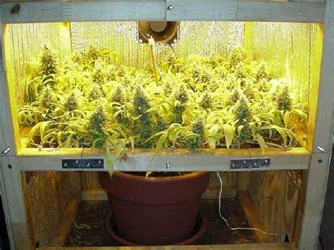 Cannabis-anbau In Kleinen Growboxen