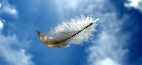 Le Aus Federn by The Feather The Wind A Defocused But Uh