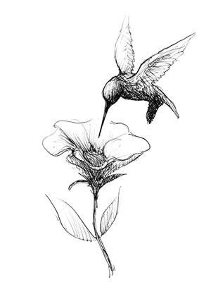 Black & White Illustrations – Elizabeth Berg