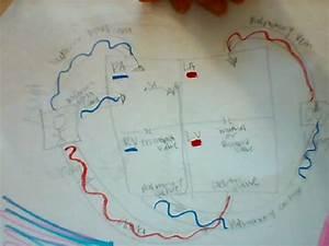 Heart Box Diagram