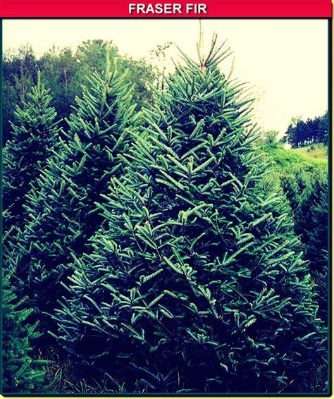 keep your xmas tree green trusper