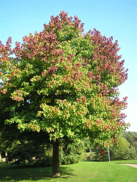 Never Plant This Tree In Your Yard  Best Trees To Plant