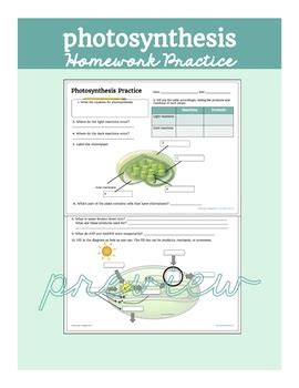 Photosynthesis Homework Practice By Biology Roots Tpt