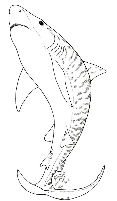 shark coloring pages images  pinterest shark