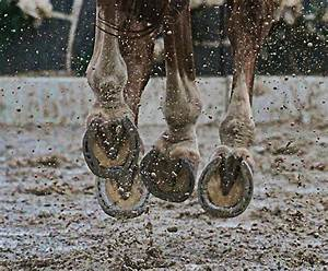 Ten Hoof Care Tips To Help Keep Your Horse U0026 39 S Hooves