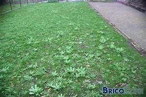 Desherbant Mauvaise Herbe : nouvelle pelouse en mauvais tat ~ Premium-room.com Idées de Décoration