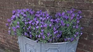 Jardiniere Fleurie Plein Soleil : plantes pour jardinires plein soleil perfect plante pour ~ Melissatoandfro.com Idées de Décoration