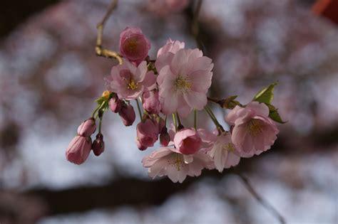 Free Images : branch plant leaf petal bloom food