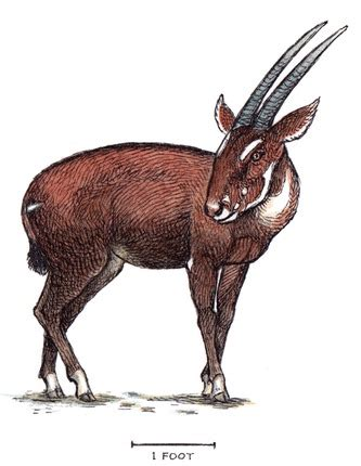 large previously unknown animal  saola