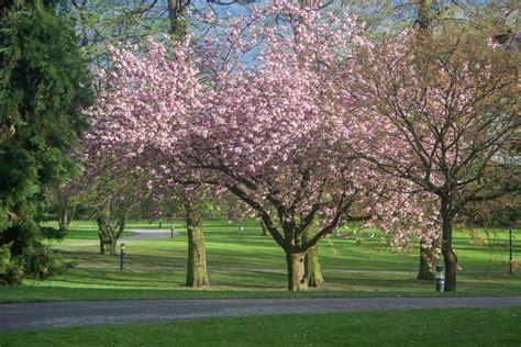 Japanischer Garten Chempark by Japanischer Garten Leverkusen Eine Paradiesische Blumen Oase