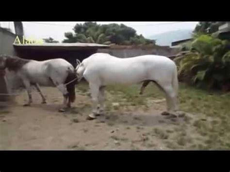 animales apareamiento apareamiento caballo burro apareamiento caballo animales animales