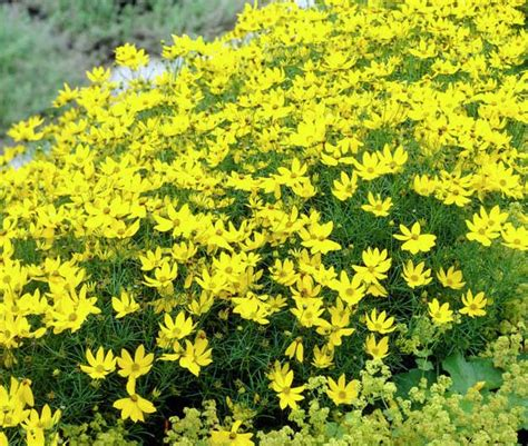 yellow flowers in summer summer flowers 35 stunning blooms perfect for the season