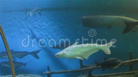 poissons d eau douce d aquarium vid 233 os vid 233 o 43472435