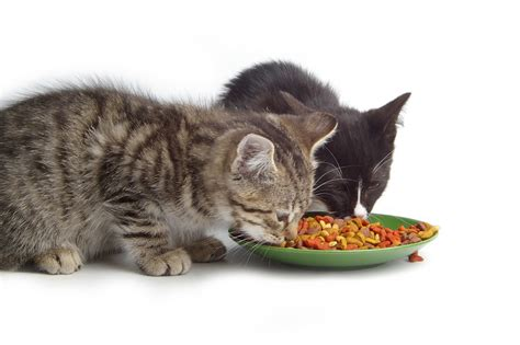 How Many Types Of Cat Food Are There?