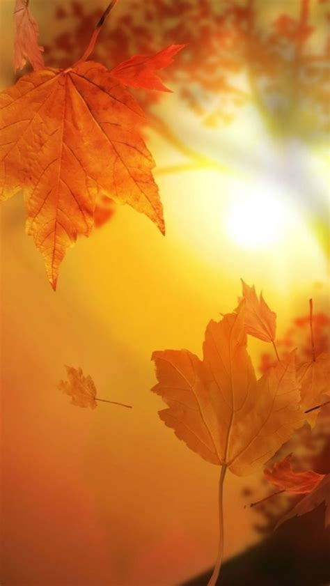 Beautiful Fall Leaves Iphone Wallpaper by 593 Best Images About Fall Wallpaper On