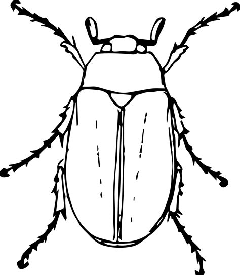 beetle clipart black and white clipart may beetle
