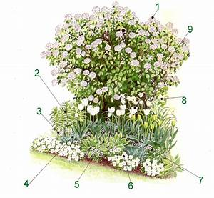Beet Im Garten : einfarbiges beet in weis ein besonderer blickfang ~ Lizthompson.info Haus und Dekorationen