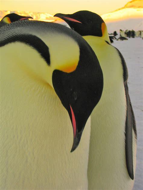 Emperor Penguin Diet