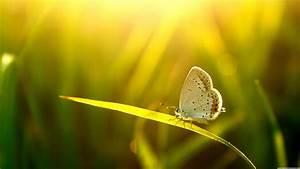 Nature Beauty The Most Beautiful Nature Photography