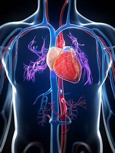 Heart Diseases And  U2018cardiovascular Diseases U2019 Are Not The