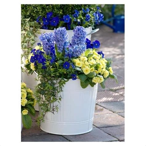 37 best images about container gardening recipes on
