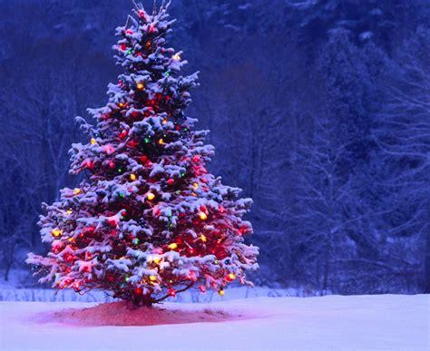 grow  christmas tree  seed  garden  eaden