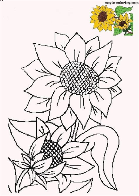 sunflowers sunflower coloring pages sunflower drawing