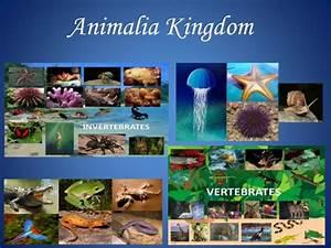 Animalia kingdom modified