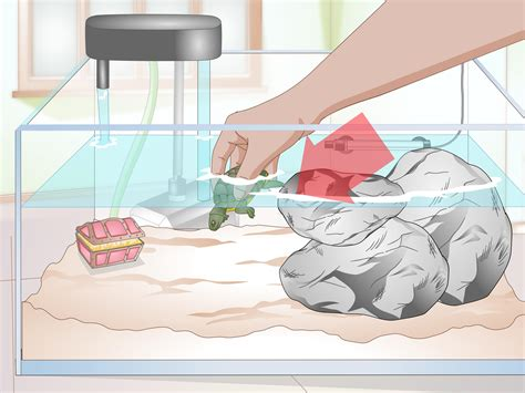 how to keep turtle tank clean 3 ways to clean a turtle tank wikihow