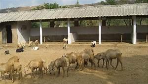 Sheep House Plans