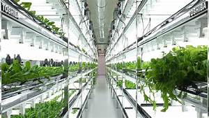 Toshiba Hydroponic Systems Introduces the Urban Farms of ...