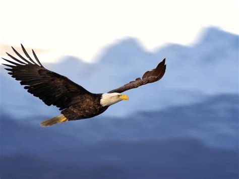 American Eagle Outfitters, Inc. (NYSE:AEO) - American ...